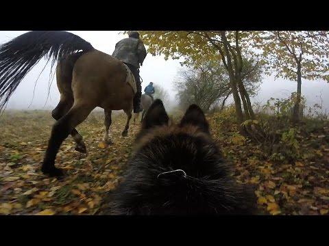 Őszi lovastúra különleges szemszögből