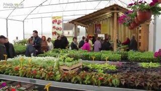 Dan zelenjavnih sadik in popustov pri Vrtnarstvu Alt