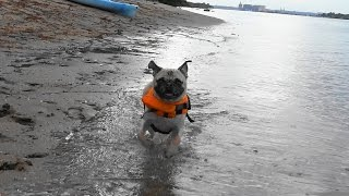 My Lunatic Gigi-Marie going Nuts and showing off her Life Jacket!