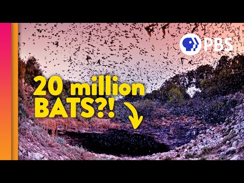 Bats: Wonders of the Night