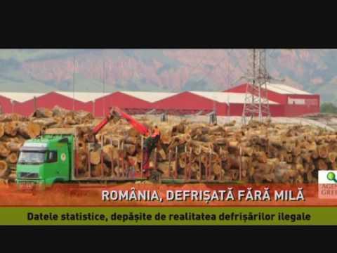 Pădurile României, exterminate cu acte în regulă
