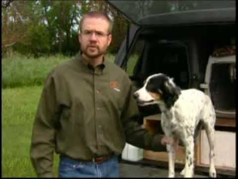 Quick Gun Dog Eye Exam