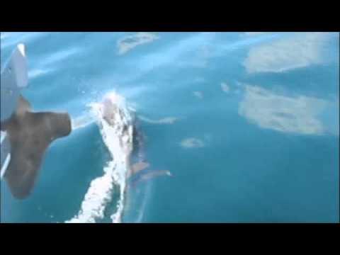 Velejada em Paraty, Golfinhos e Mau tempo no veleiro aventura