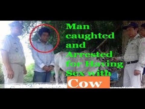 Man  During Doing Sexx With Cow Animal On The Road With Hide Camera