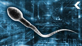 Scientists Want to Insert Bionic Sperm Into Women's Vaginas by DNews