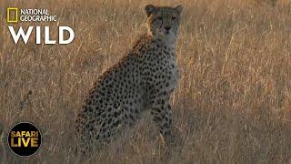 Safari Live - Day 377 | Nat Geo Wild by Nat Geo WILD