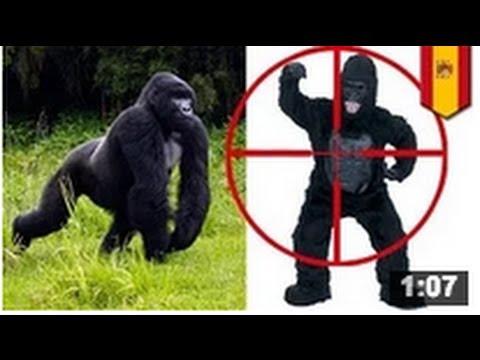 INCREÍBLE: Un homme gorille s'est fait attaquer par un vétérinaire