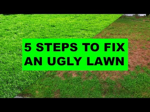 , title : 'How to Fix an Ugly Lawn in 5 Easy Steps'