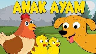 Video Anak ayam | Tek kotek kotek | Lagu Anak-Anak Indonesia Terpopuler | Kumpulan | Lagu Anak TV MP3, 3GP, MP4, WEBM, AVI, FLV Februari 2018