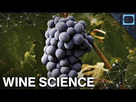 The Science Behind Wine
