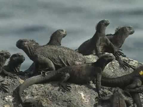 Galapagos: Tieruntersuchung (1/7)