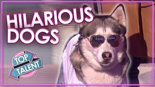 Video FUNNIEST DOG AUDITIONS & MOMENTS EVER on Britain's Got Talent | Top Talent MP3, 3GP, MP4, WEBM, AVI, FLV Desember 2018