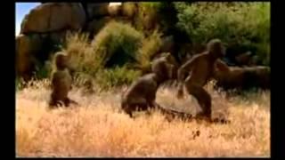 Australopithecus  Alimentación1