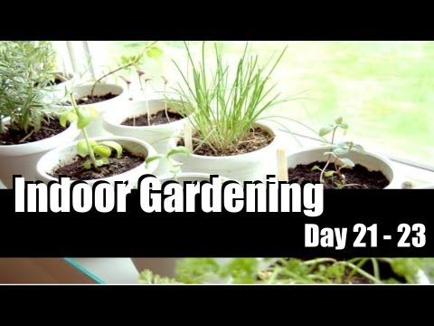 Indoor Gardening Day 21 – 23