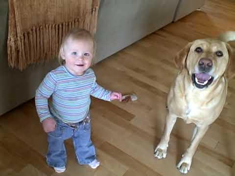 現在要當條狗還真不容易,這隻拉布拉多正在教牠的小主人怎麼跳!