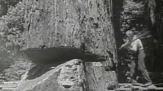 Video Redwood Lumber Industry, Northern California - 1947 MP3, 3GP, MP4, WEBM, AVI, FLV April 2019