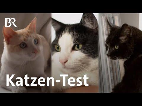 Katzen-Experiment: Menschen, Futter, Spielzeug | Gut zu ...