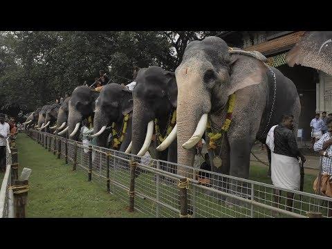 Assignment Asia: Elephants of Kerala