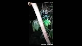 Video Perwujudan Pocong Paling Dekat-T.E.L Doni feat Bang Kai-Hutan Togel Ngabang Kalbar MP3, 3GP, MP4, WEBM, AVI, FLV Agustus 2019