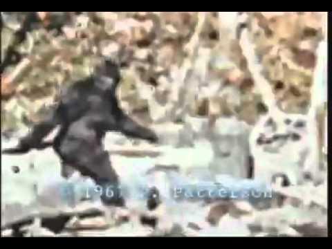 il bigfoot, una vera leggenda ripresa in questo video!