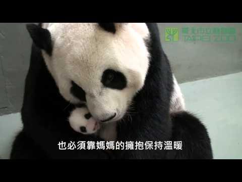 給我一個抱抱 Give Me a Hug !