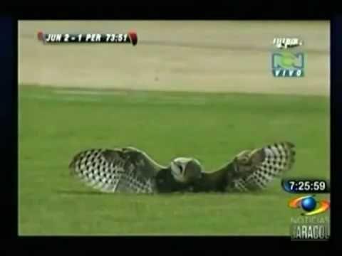 一腳踢開球場上受傷的貓頭鷹…超不人道!