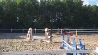Video Madison and I jumping 2'9 jumper course! download in MP3, 3GP, MP4, WEBM, AVI, FLV Februari 2017