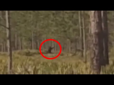 Bigfoot in Starkey Park, FL Caught on Tape!!!