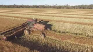 Nonton Windrowing Canola 2016 Film Subtitle Indonesia Streaming Movie Download