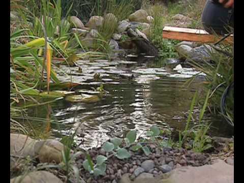 Lona pvc estanque videos videos relacionados con lona for Lona para estanque precio
