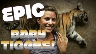 Amazing Baby Tigers! Thailand Tiger Kingdom Travel Review
