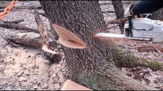 Video #353 DANGEROUS TREES! Severe Lean, Good info to share MP3, 3GP, MP4, WEBM, AVI, FLV September 2019