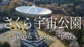絶景 空撮 さくら宇宙公園の桜とパラボラ -  Cherry blossoms and parabola antennaa