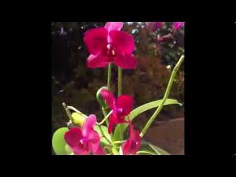 comment prendre soin de l'orchidée