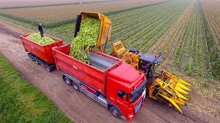Video Picking Organic Sweet Corn |  Oxbo 2475 corn picker  | suiker mais plukken MP3, 3GP, MP4, WEBM, AVI, FLV Maret 2019