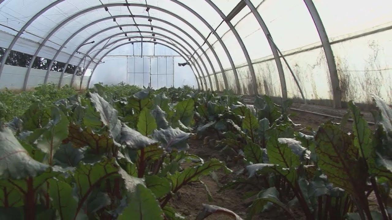 Η θεραπευτική αξία της γης για τα άτομα με εξαρτήσεις και η παραγωγή σε… ζυμαρικά!