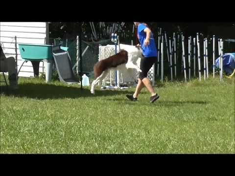 Strut – Sept 2014 – Brilliant Dogs UKI
