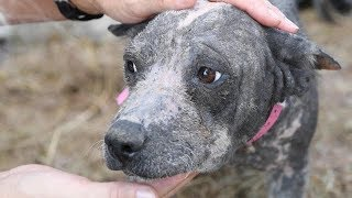 Pepper needed help by The Humane Society of the United States