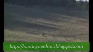 Video Streľba na diviaka a jeleňa. - Poľovníctvo.flv MP3, 3GP, MP4, WEBM, AVI, FLV Oktober 2017