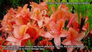 Kew United Kingdom  City pictures : Kew Gardens, London, England - United Kingdom