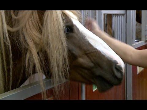 В деревне Ермолино прошел традиционный конно-спортивный праздник