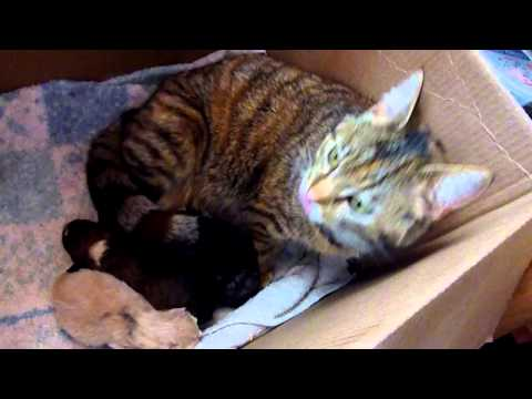 inseriscono un cane in una cucciolata di gatti: guardate la mamma gatta!