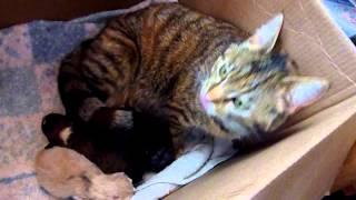Umieścili osieroconego szczeniaka w kojcu kociej mamy. Jej reakcja zaskoczyła właścicieli.