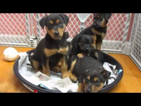 Rescue Dogs for adoption in new jersey - 2034332030