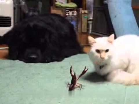 小白的第一次接觸~~這到底是...什麼生物~~
