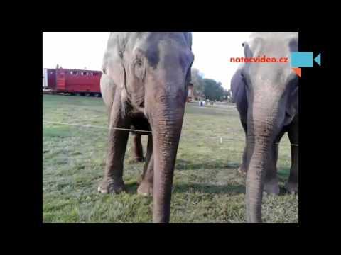 Sloni v Novém Jičíně