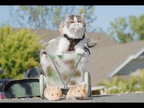If Cats Ruled the World (видео)