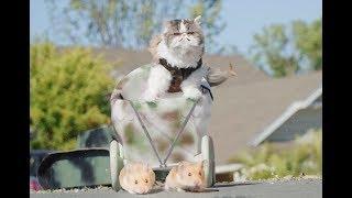 Video If Cats Ruled the World MP3, 3GP, MP4, WEBM, AVI, FLV Juni 2018