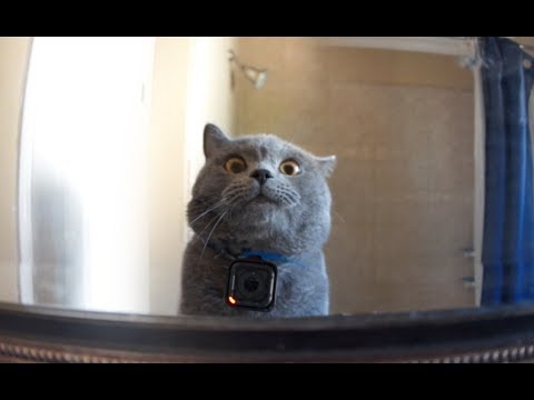 GoPro on a Cat Left Home Alone (видео)