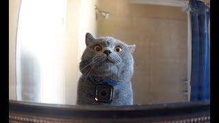 Video GoPro on a Cat Left Home Alone MP3, 3GP, MP4, WEBM, AVI, FLV Juni 2018